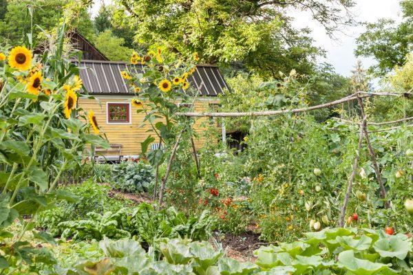 Pogled na vrt z Hiškotom v ozadju